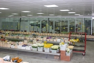 Cash and carry, fresh flower market at Flowervision in Bristol