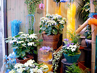 Flower Shop display:  In shop training course